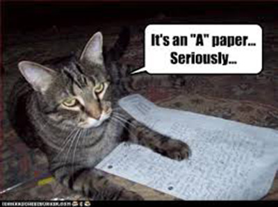 "LOLCAT says, ""It's an A paper... Seriously."""